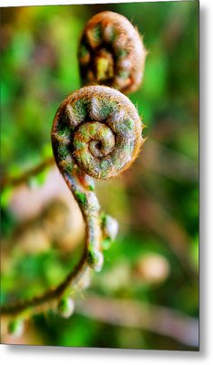 Metal Print featuring the photograph Scaly Male Fern Frond by Fabrizio Troiani