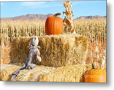 Metal Print featuring the photograph Scarecrow Breaktime by Vinnie Oakes