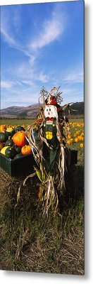 Scarecrow In Pumpkin Patch, Half Moon Metal Print by Panoramic Images
