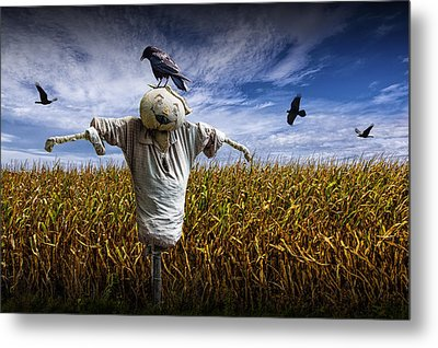 Scarecrow With Black Crows Over A Cornfield Metal Print by Randall Nyhof
