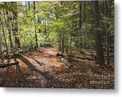 Scared Grove 2 Metal Print by William Norton