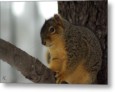 Scared Squirrel Metal Print