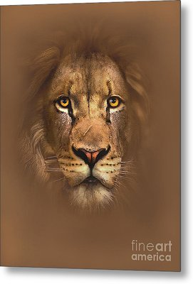 Scarface Lion Metal Print by Robert Foster