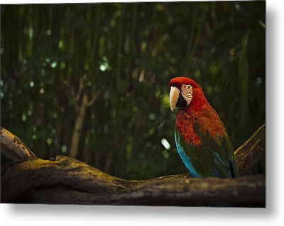 Scarlet Macaw Profile Metal Print by Bradley R Youngberg