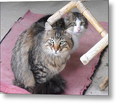 Sceptical Cats Metal Print by Lionel Gaffen