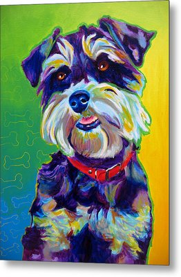 Schnauzer - Charly Metal Print by Alicia VanNoy Call