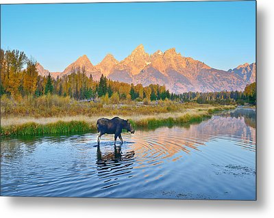 Schwabacher Morning Travels Metal Print by Greg Norrell