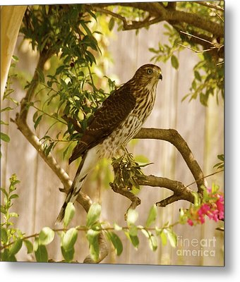 Scoping Metal Print