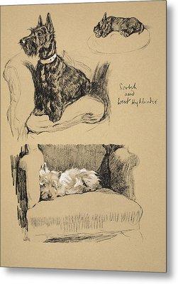 Scotch And West Highlander, 1930 Metal Print by Cecil Charles Windsor Aldin