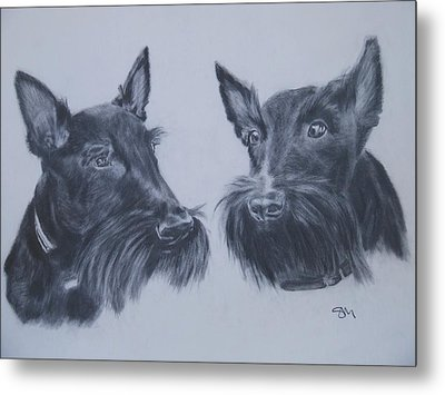 Scotties Metal Print