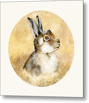 Scottish Hare Metal Print by Nathalie Amber