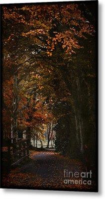 Metal Print featuring the photograph Scottish Woodland Walk by Liz  Alderdice
