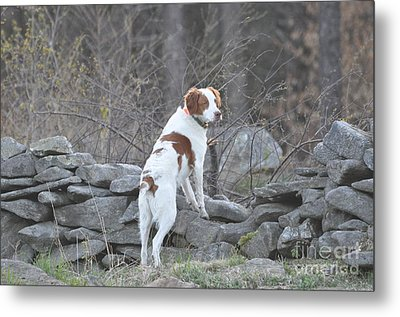 Scout Metal Print by Sally Rice