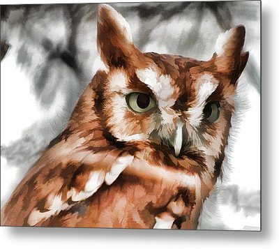 Metal Print featuring the photograph Screech Owl Photo Art by Constantine Gregory