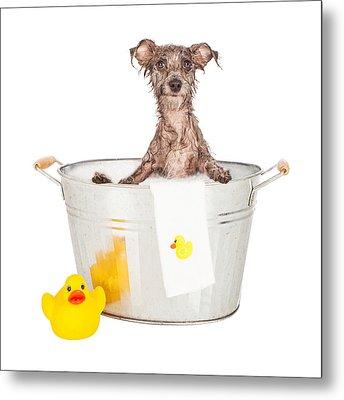 Scruffy Terrier In A Bath Tub Metal Print by Susan Schmitz