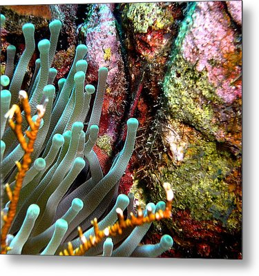 Metal Print featuring the photograph Sea Anemone And Coral Rainbow Wall by Amy McDaniel