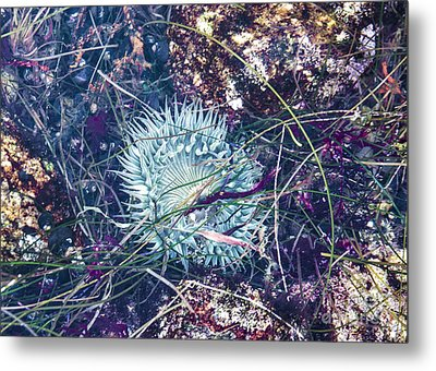 Metal Print featuring the mixed media Sea Anenome - Terrestrial Flower by Terry Rowe