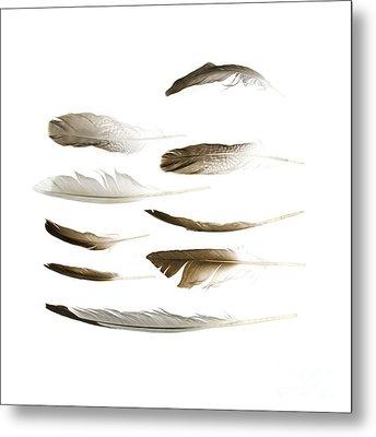Sea Bird Feathers Metal Print by Jennifer Booher