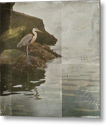 Metal Print featuring the photograph Sea Bird by Kevin Bergen