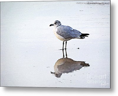 Metal Print featuring the photograph Sea Birds No.1 by Melissa Sherbon
