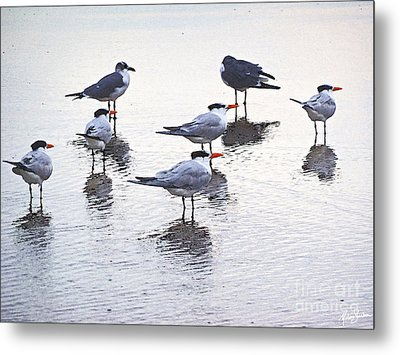 Metal Print featuring the photograph Sea Birds No.2 by Melissa Sherbon