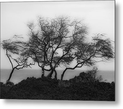 Metal Print featuring the photograph Sea Breeze 1 by Jim Snyder