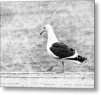 Sea Gull On Wharf Patrol Metal Print by Jon Woodhams