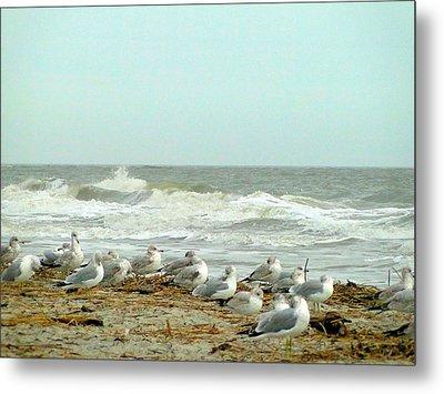 Sea Gulls In Windy Surf Metal Print by Cindy Croal