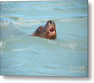 Sea Lion Metal Print by Jennifer Kimberly