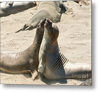 Sea Lion Love From The Book My Ocean Metal Print