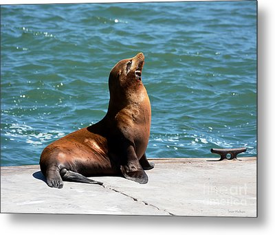 Sea Lion Posing On Boat Dock Metal Print
