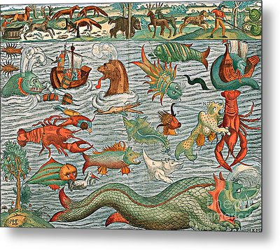 Sea Monsters 1544 Metal Print by Photo Researchers