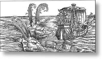 Sea Monsters Or Whales, 16th Century Metal Print by Photo Researchers