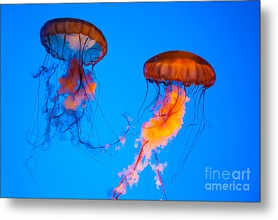 Sea Nettles Metal Print by Anthony Sacco