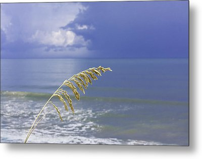 Sea Oats Ahead Of The Storm Metal Print