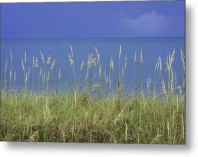 Sea Oats By The Blue Ocean And Sky Metal Print by Karen Stephenson