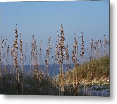 Sea Oats Metal Print by Michele Kaiser