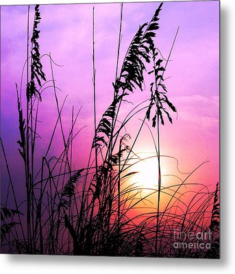 Sea Oats Metal Print by Scott Cameron