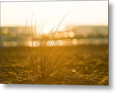 Metal Print featuring the photograph Sea Oats Sunset by Sebastian Musial