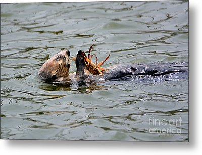 Sea Otter Munching On Crab Leg Metal Print