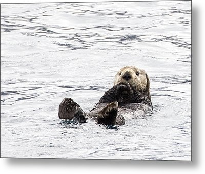Sea Otter Metal Print by Saya Studios