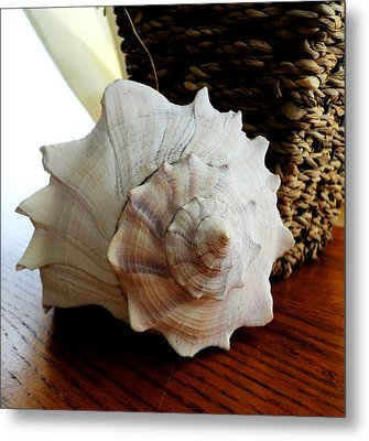 Sea Shell And Basket Metal Print by Yolanda Rodriguez