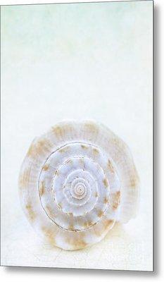 Sea Shell Metal Print by Stephanie Frey