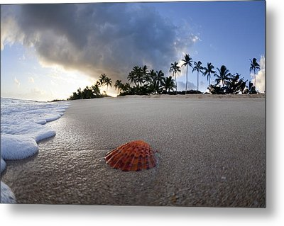 Sea Shell Sunrise Metal Print by Sean Davey