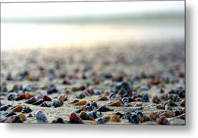 Sea Shells By The Sea Shore Metal Print by Kaleidoscopik Photography