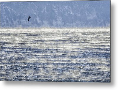 Sea Smoke And Gull Blues Metal Print by Marty Saccone