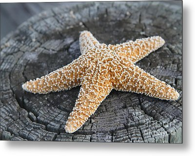 Sea Star On Post Metal Print