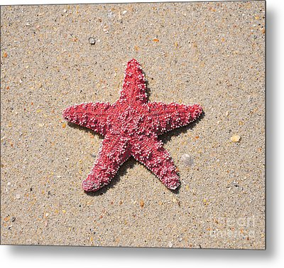 Sea Star - Red Metal Print by Al Powell Photography USA