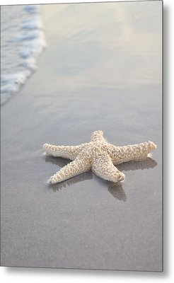 Sea Star Metal Print by Samantha Leonetti