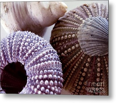 Sea Urchins  Metal Print by Colleen Kammerer